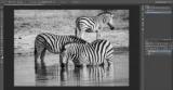 Як розфарбувати чорно-білу фотографію в